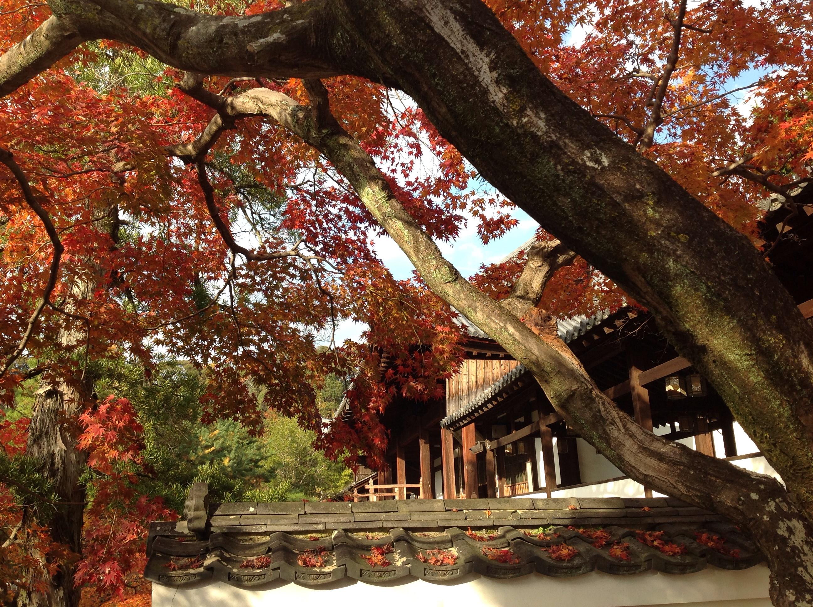 foglie colorata